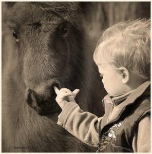 enfant_doigt_dans_le_nez_poney_cheval